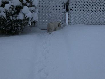 Marley_snow_2