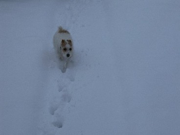 Marley_snow_3