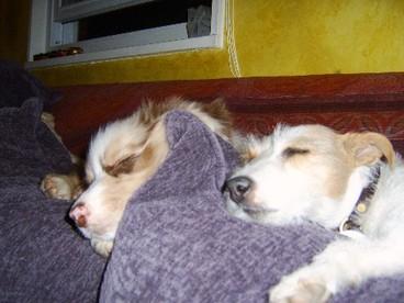 Sleepydogs