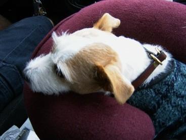 Tireddog